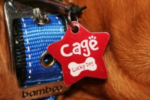 my tag, its so pretty