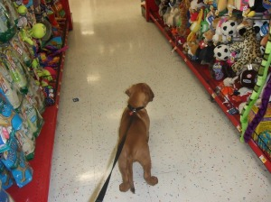 chew-toy heaven??