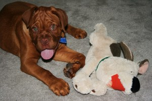 i still have my teddy from my breeder ma!