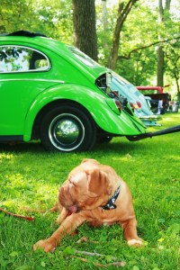 guarding the VW