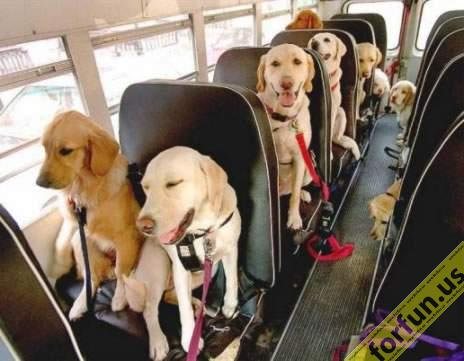 doggie bus?
