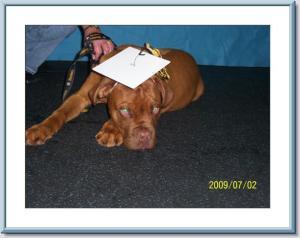 he graduated puppy class