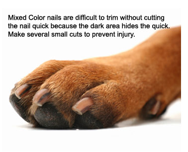 how to cut my small dogs nails