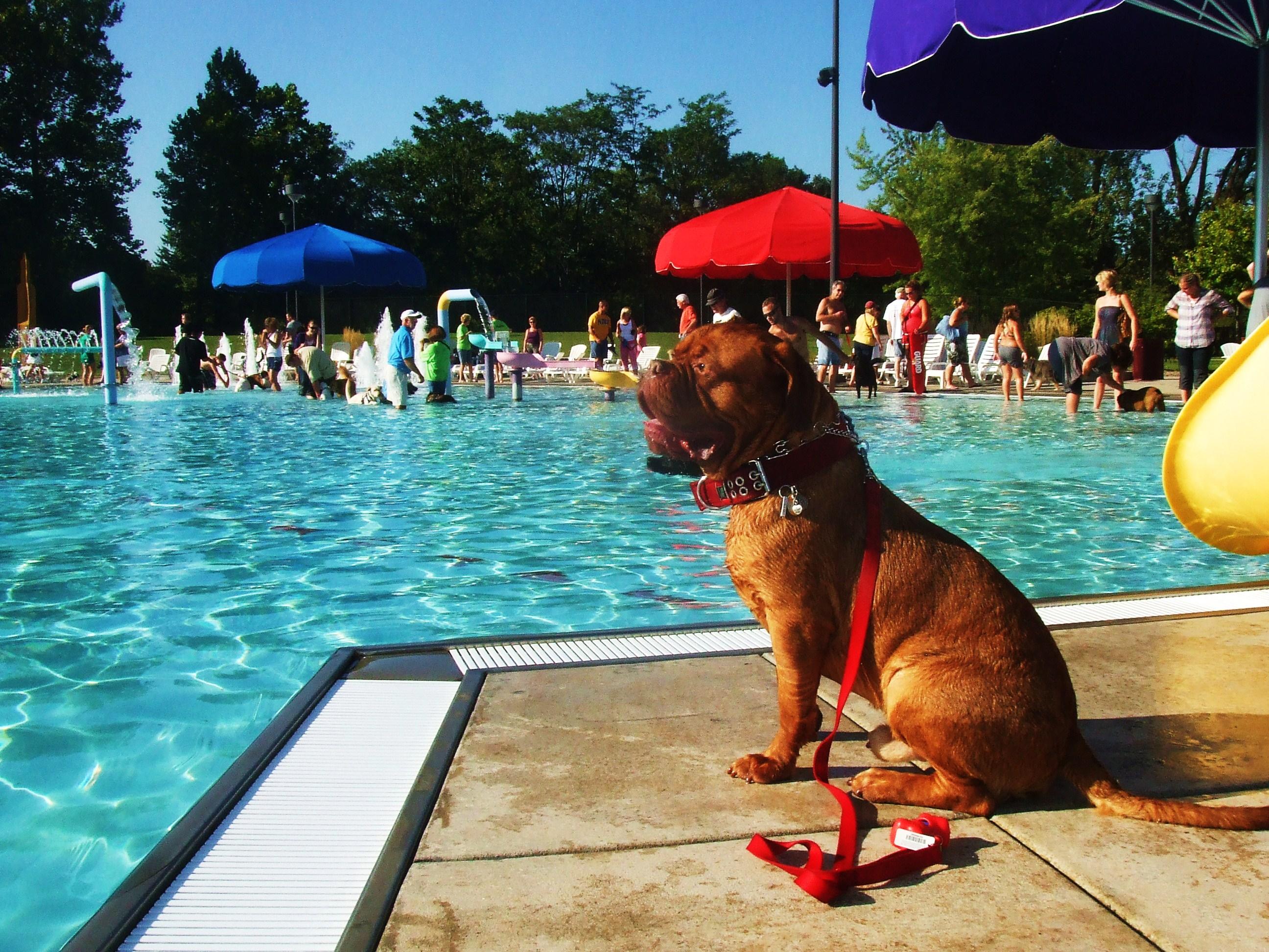 do all dogs know how to swim