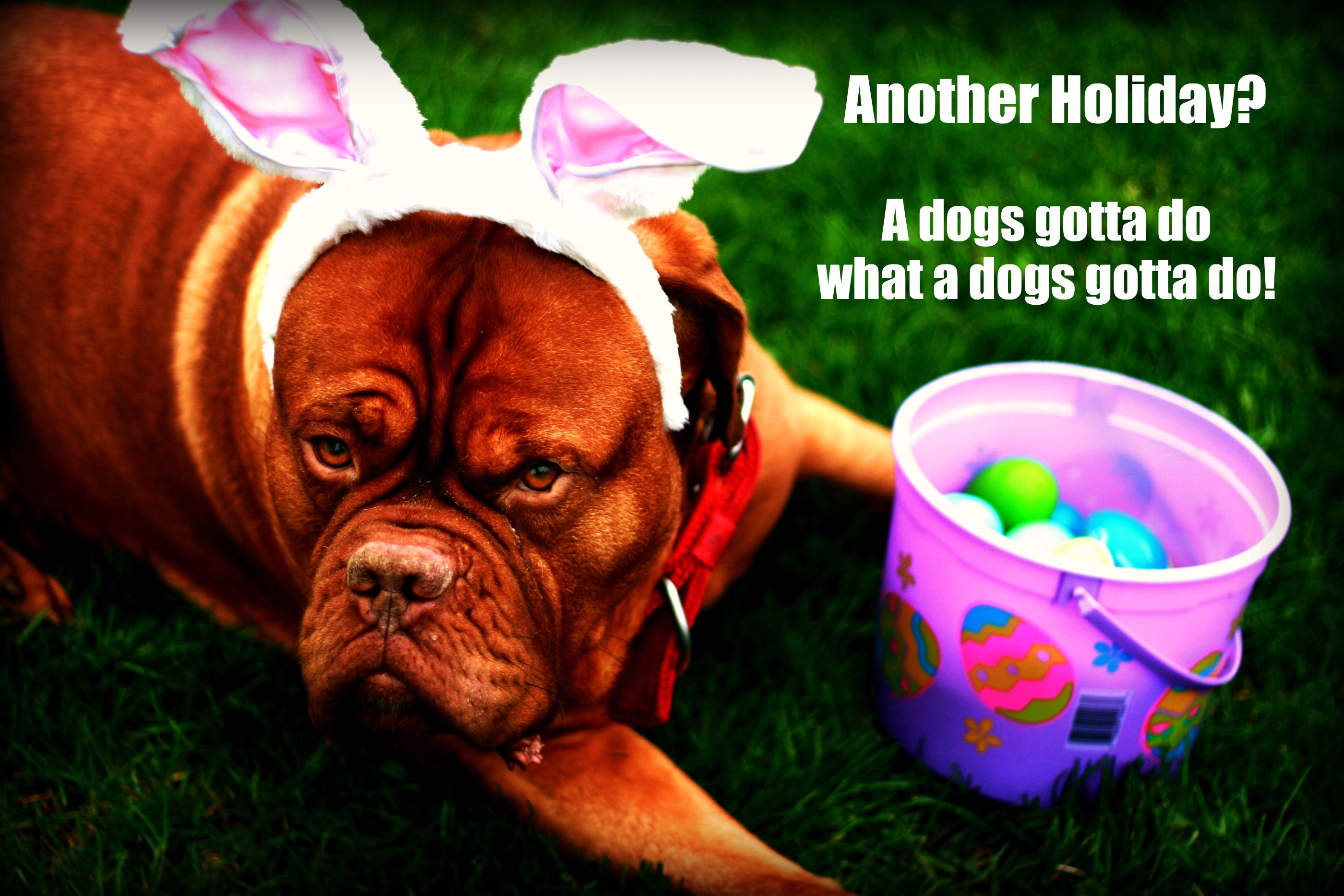 Happy Easter Dog Happy Easter